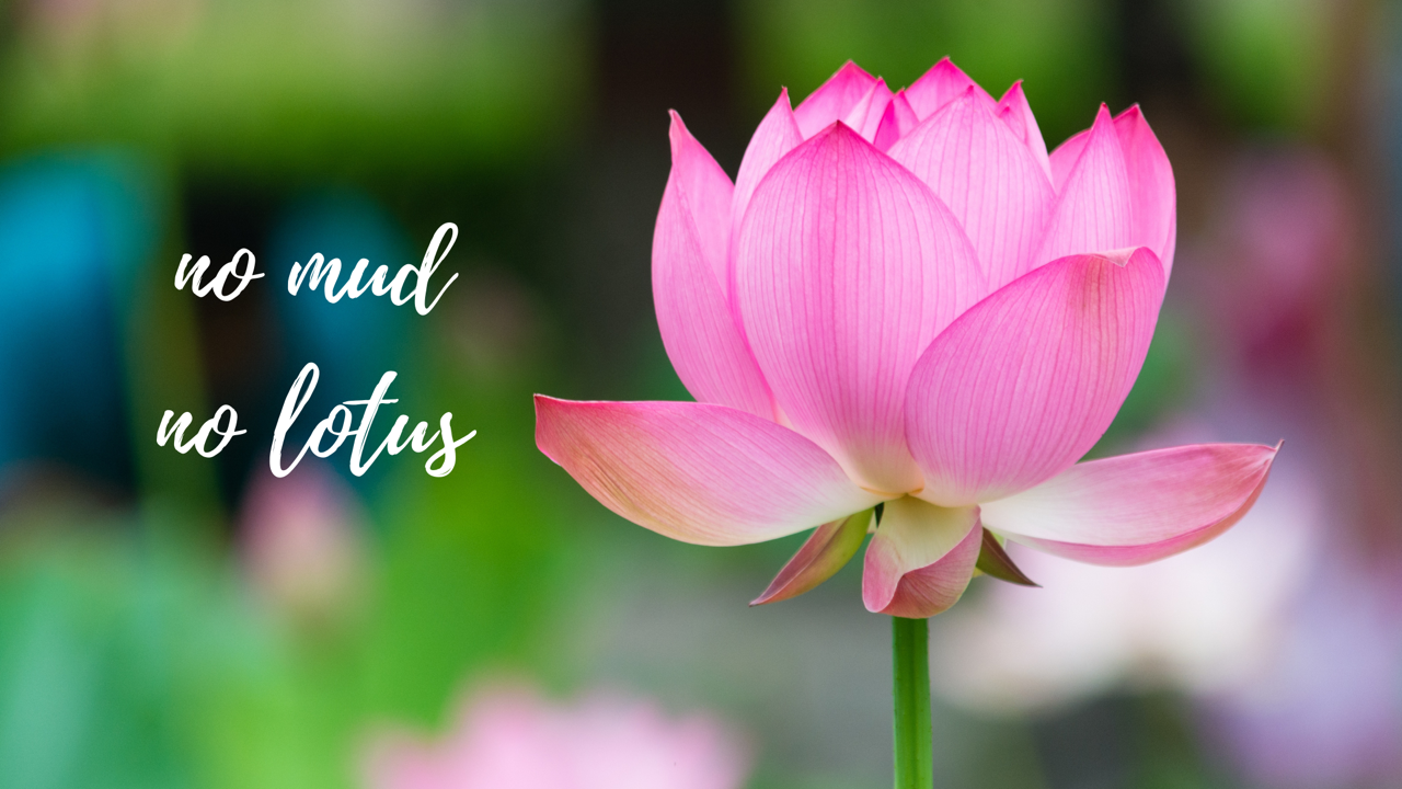 The Lotus | Archetypes for Women in Business | The Thrive Factor | Shannon Dunn